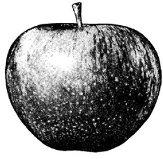 apple-granny